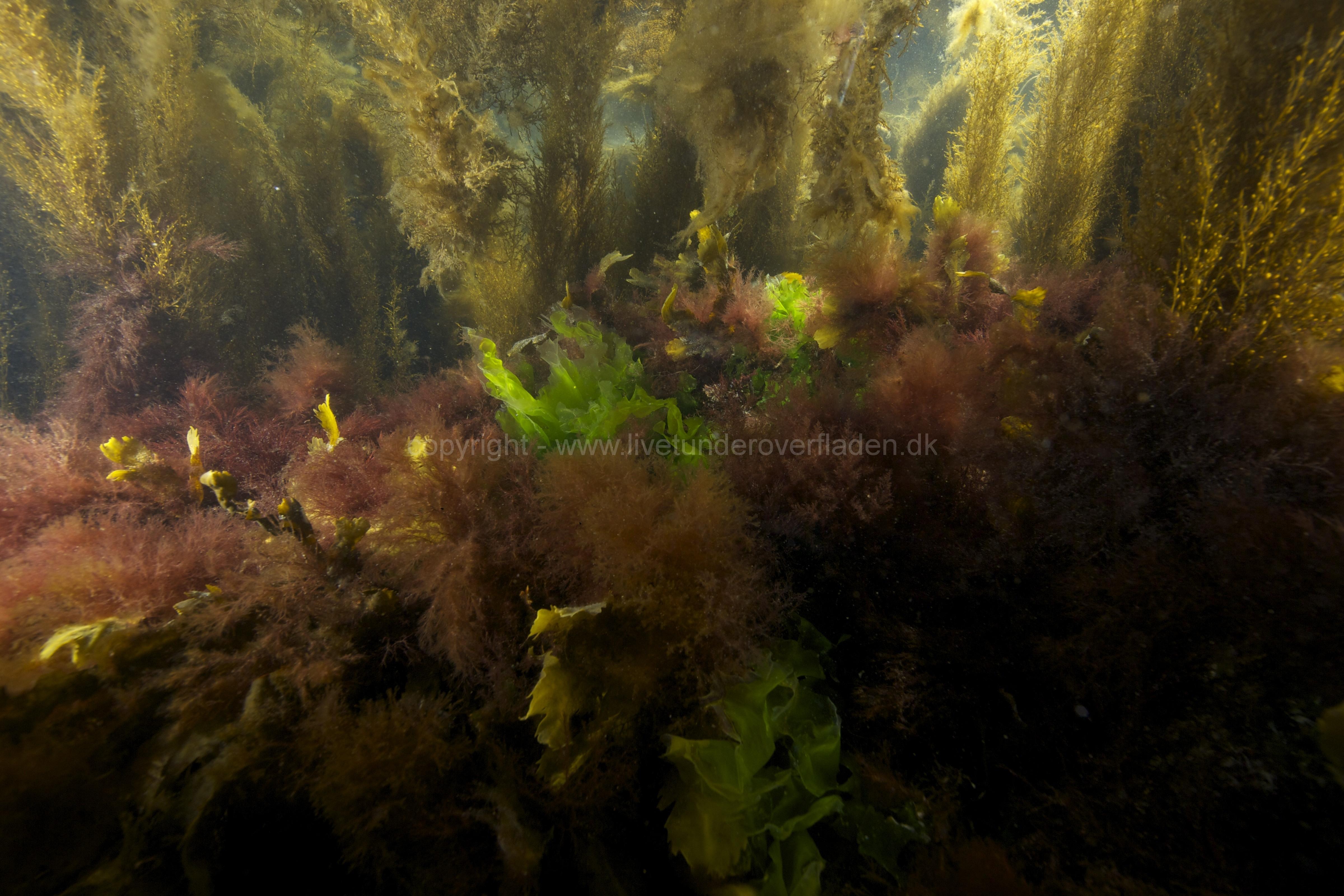 Marine habitat_Martin_Kielland 89