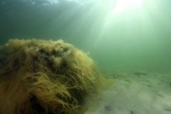 Marine habitat_Martin_Kielland 25
