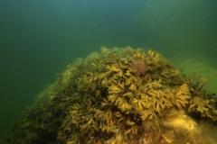 Marine habitat_Martin_Kielland 28