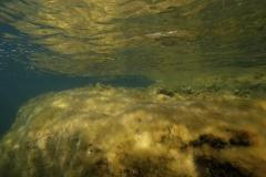 Marine habitat_Martin_Kielland 31