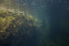 Marine habitat_Martin_Kielland 32