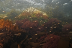 Marine habitat_Martin_Kielland 38