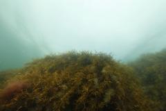 Marine habitat_Martin_Kielland 39