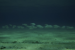 Marine habitat_Martin_Kielland 71