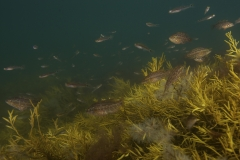 Marine habitat_Martin_Kielland 78