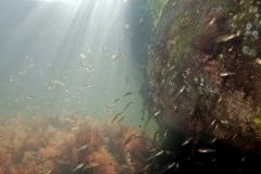 Marine habitat_Martin_Kielland 79