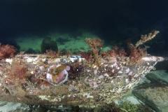 Marine habitat_Martin_Kielland 86