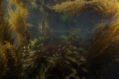 Marine habitat_Martin_Kielland 87