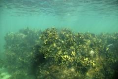 Marine habitat_Martin_Kielland 9