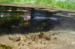 4 Dykker i bækken