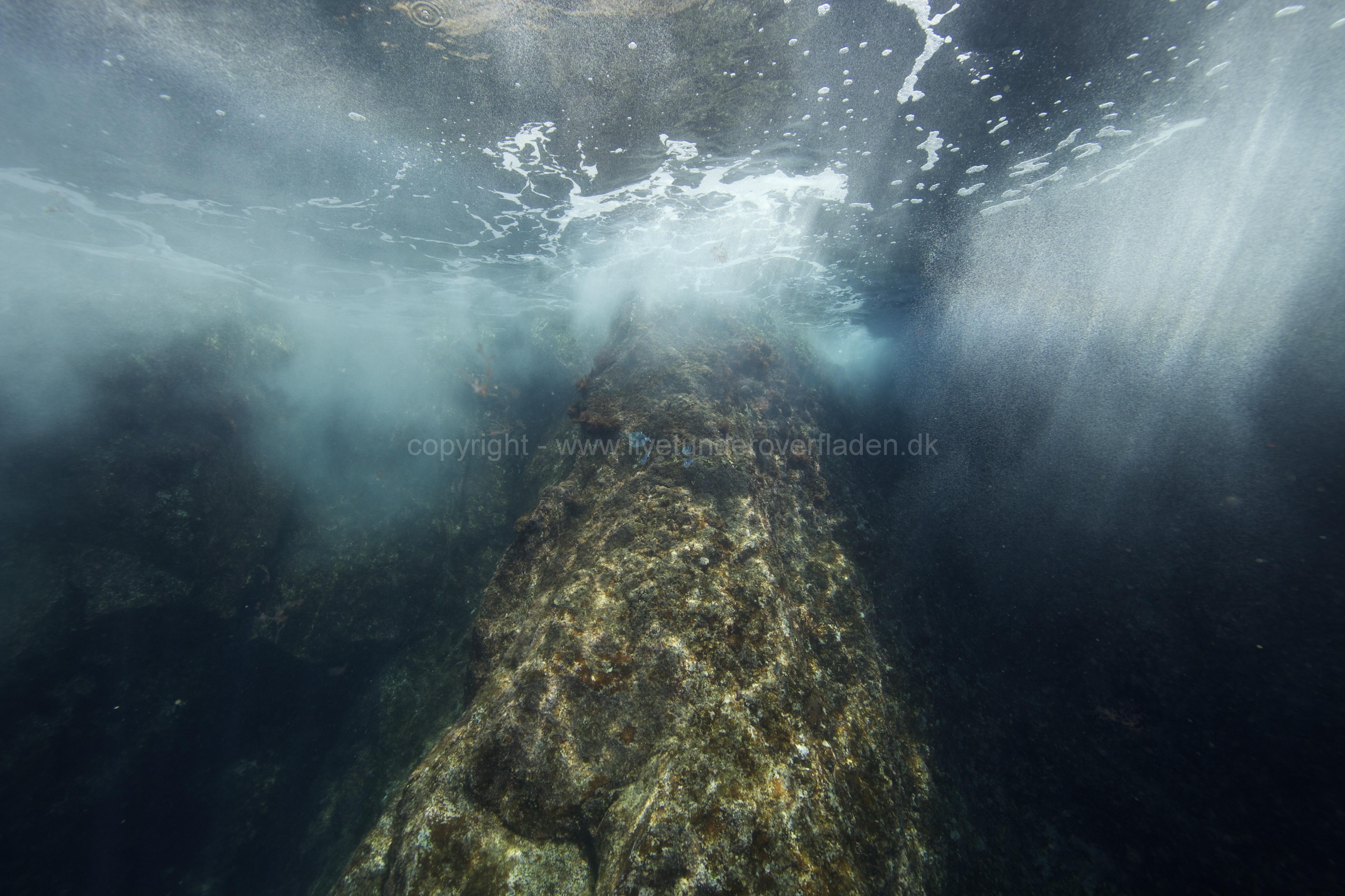 Marine habitat_Martin_Kielland 65