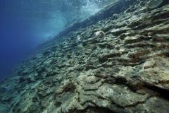 Marine habitat_Martin_Kielland 61