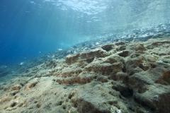 Marine habitat_Martin_Kielland 62