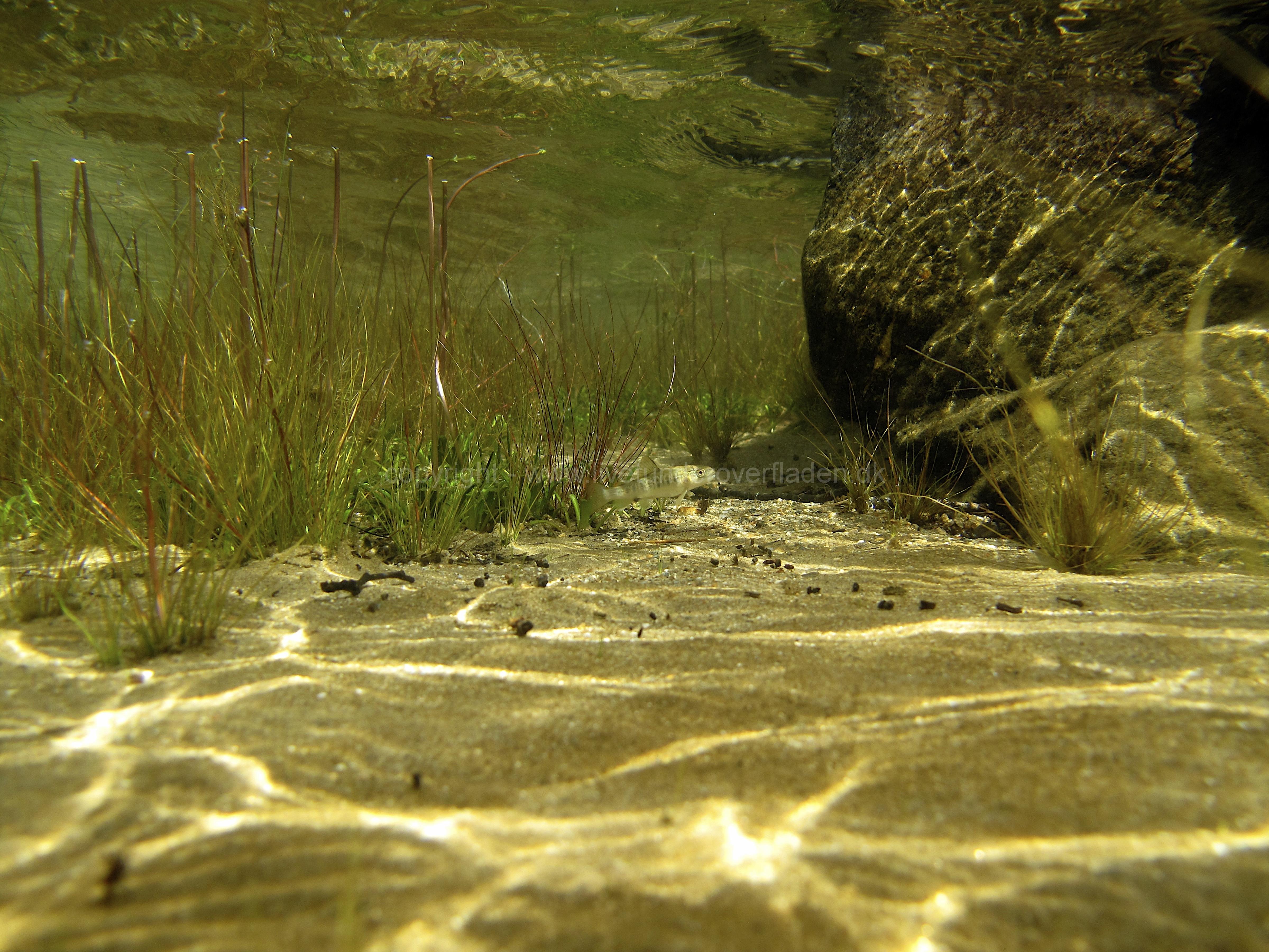 Freshwater habitat_Martin_Kielland 2