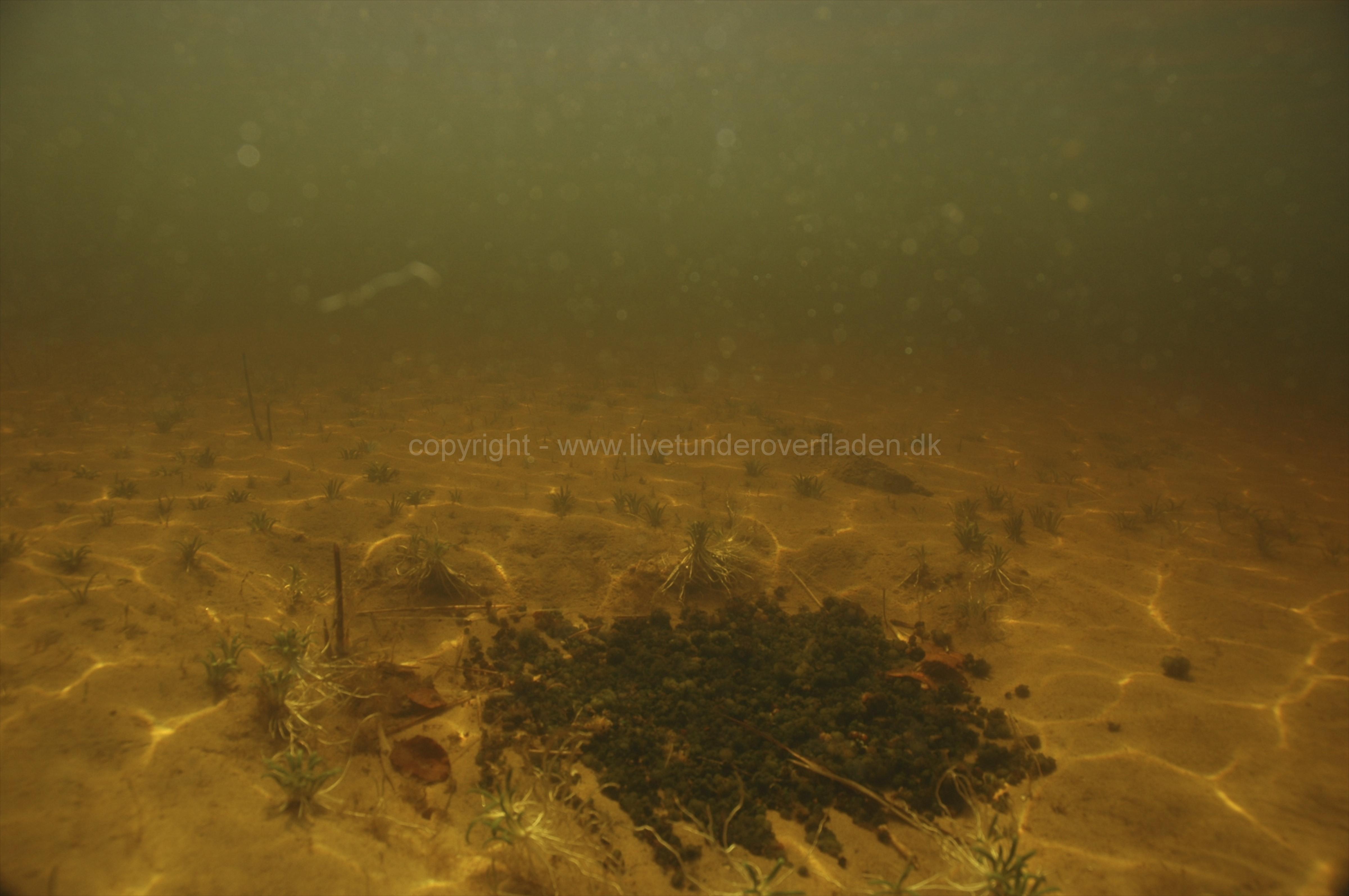 Freshwater habitat_Martin_Kielland 23