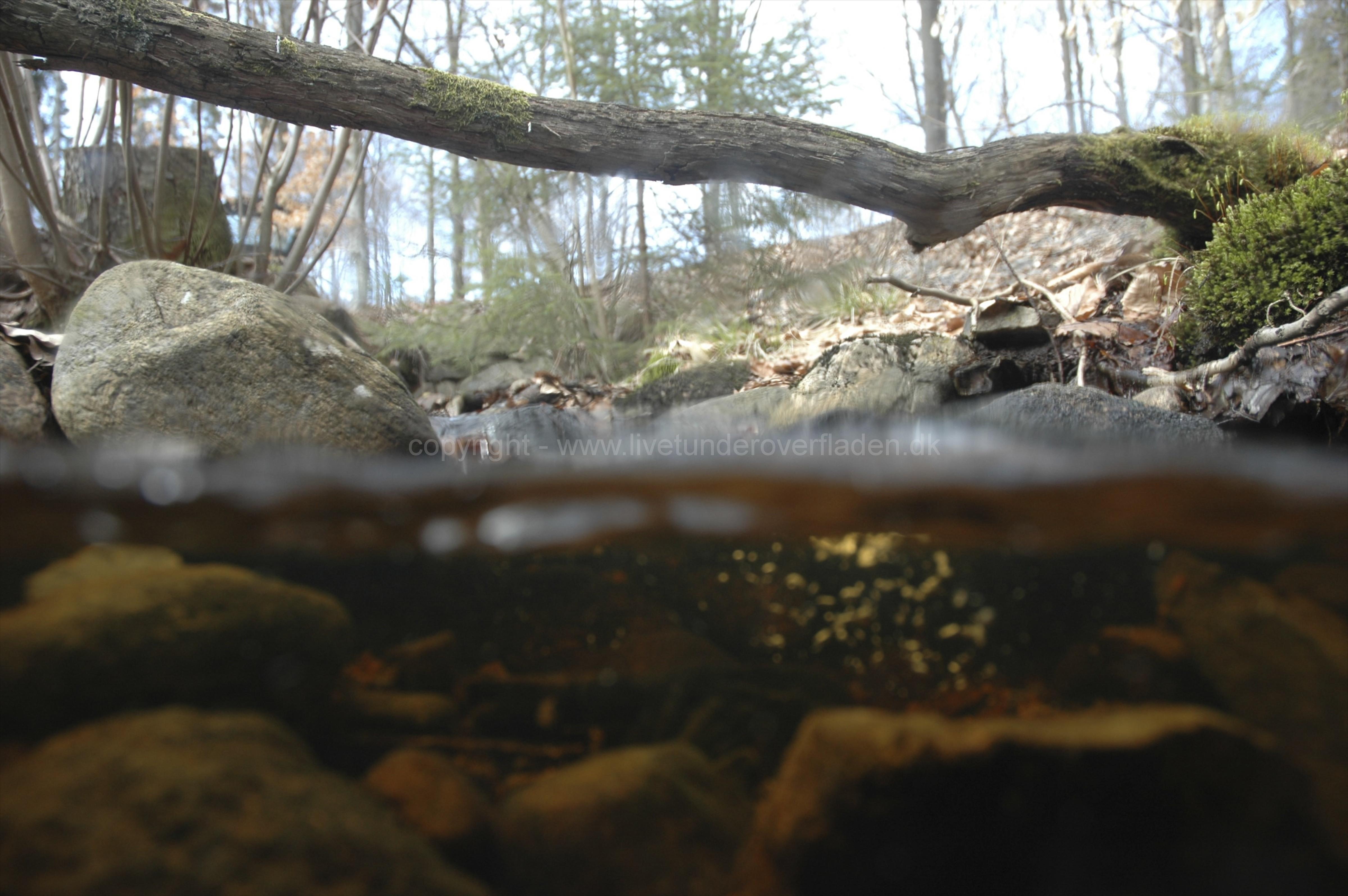 Freshwater habitat_Martin_Kielland 24