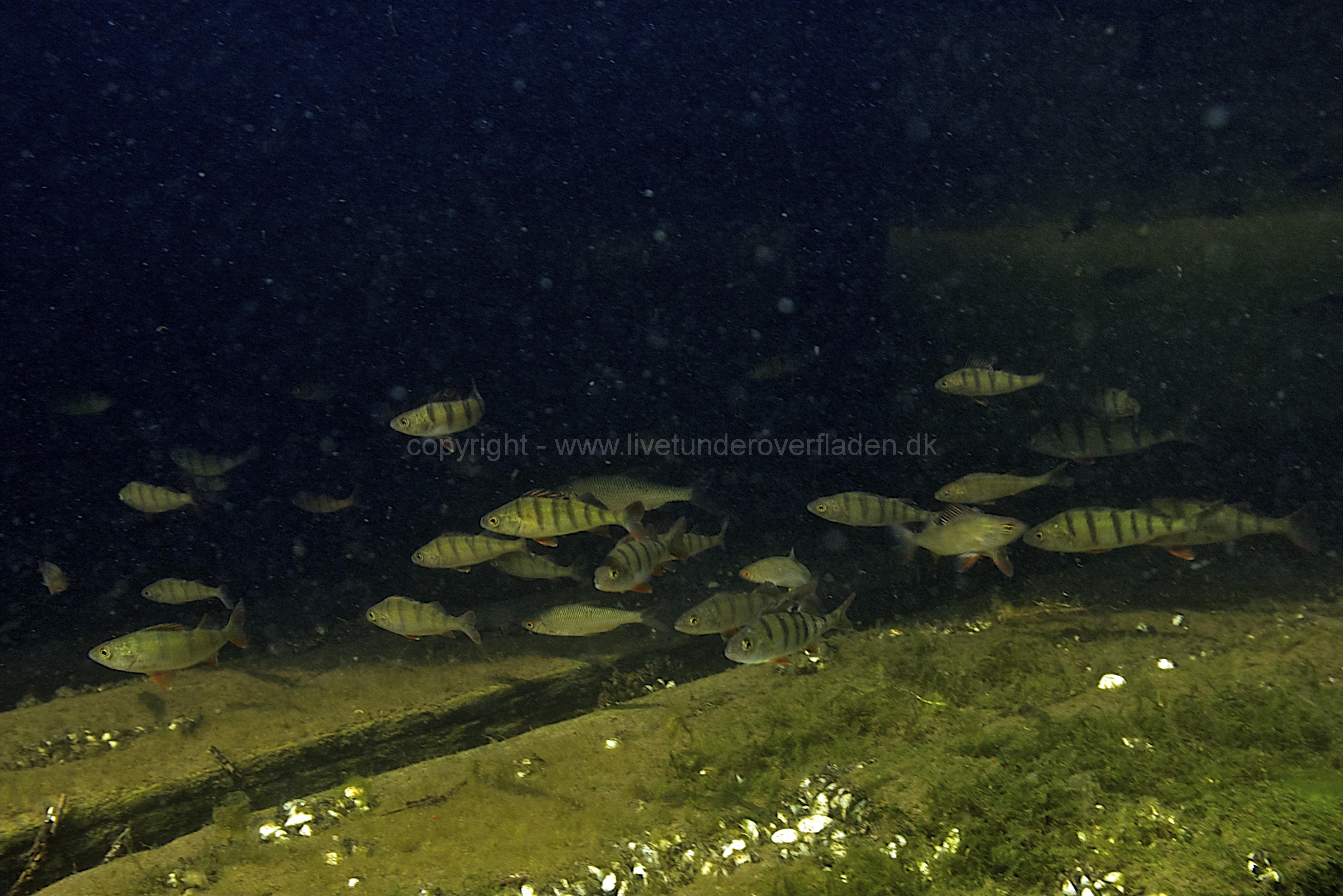 Freshwater habitat_Martin_Kielland 27