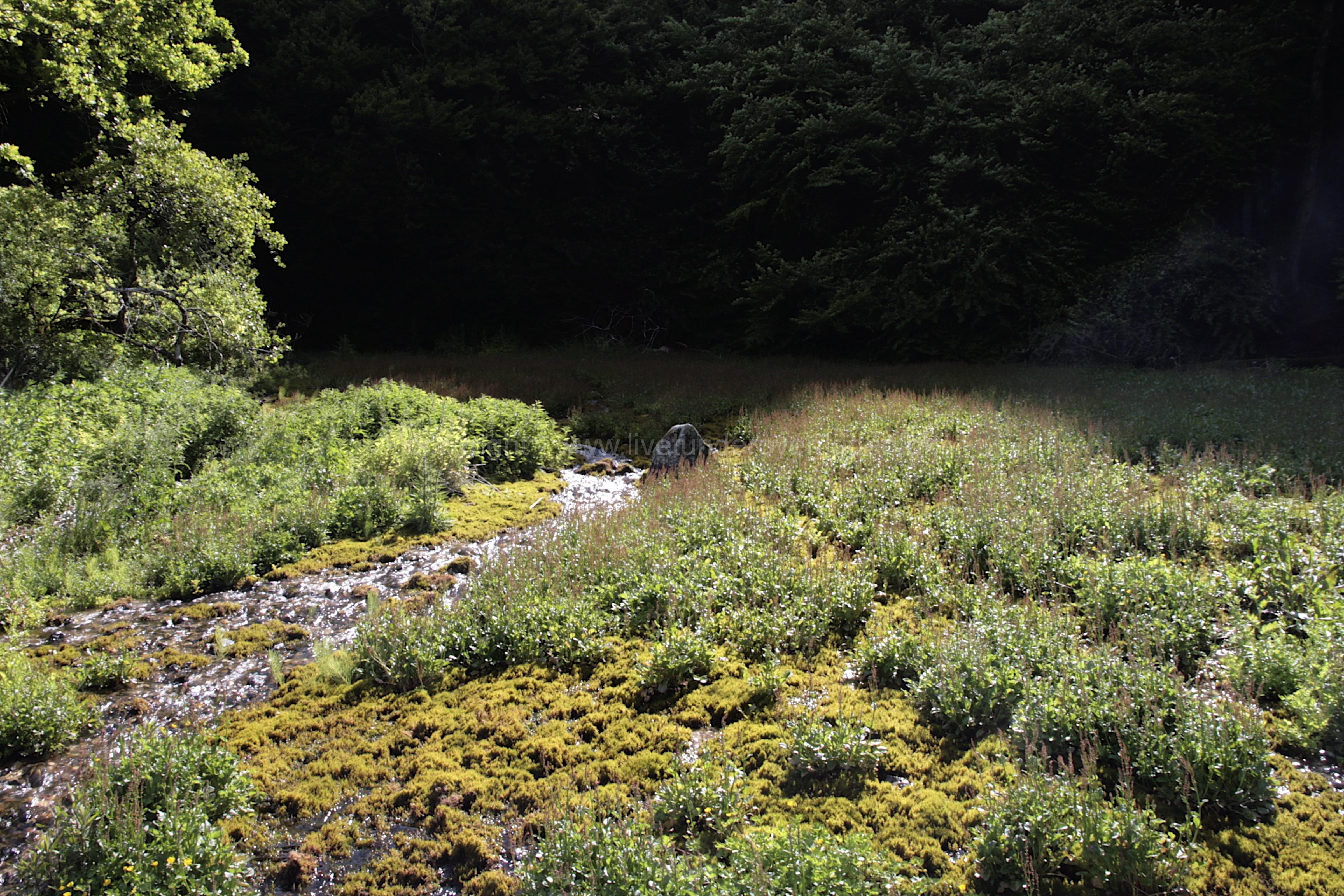 Freshwater habitat_Martin_Kielland 30