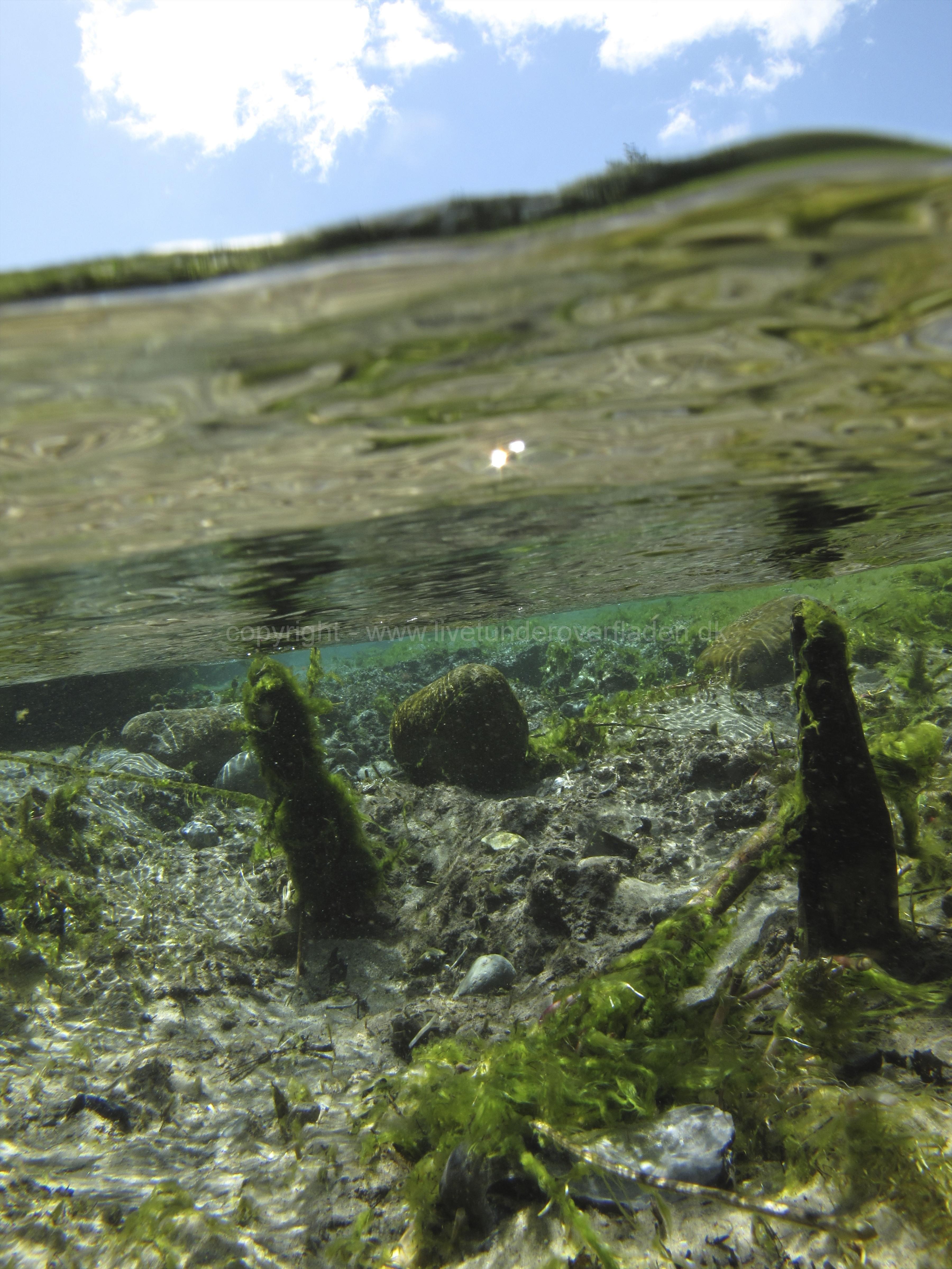 Freshwater habitat_Martin_Kielland 31
