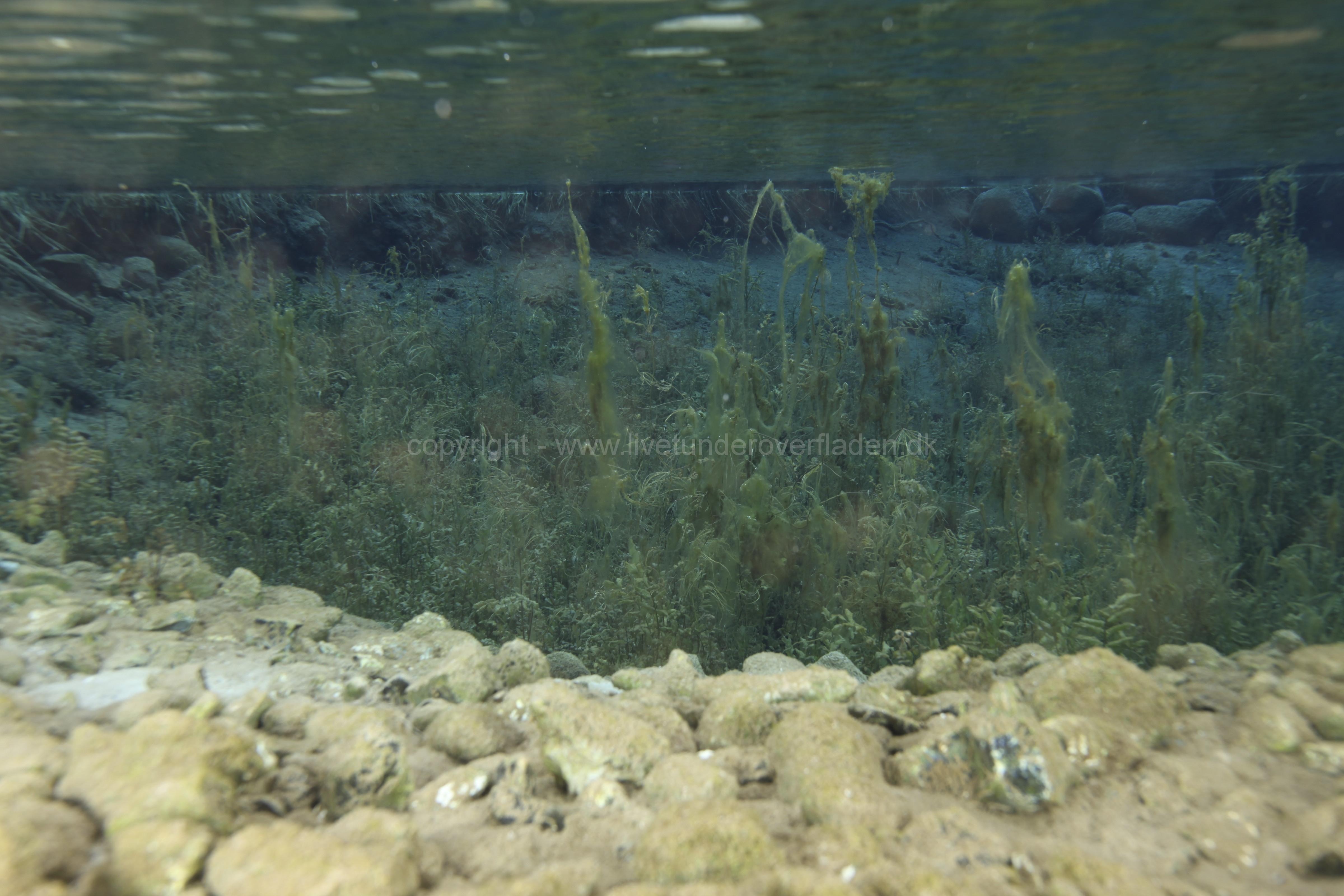 Freshwater habitat_Martin_Kielland 48