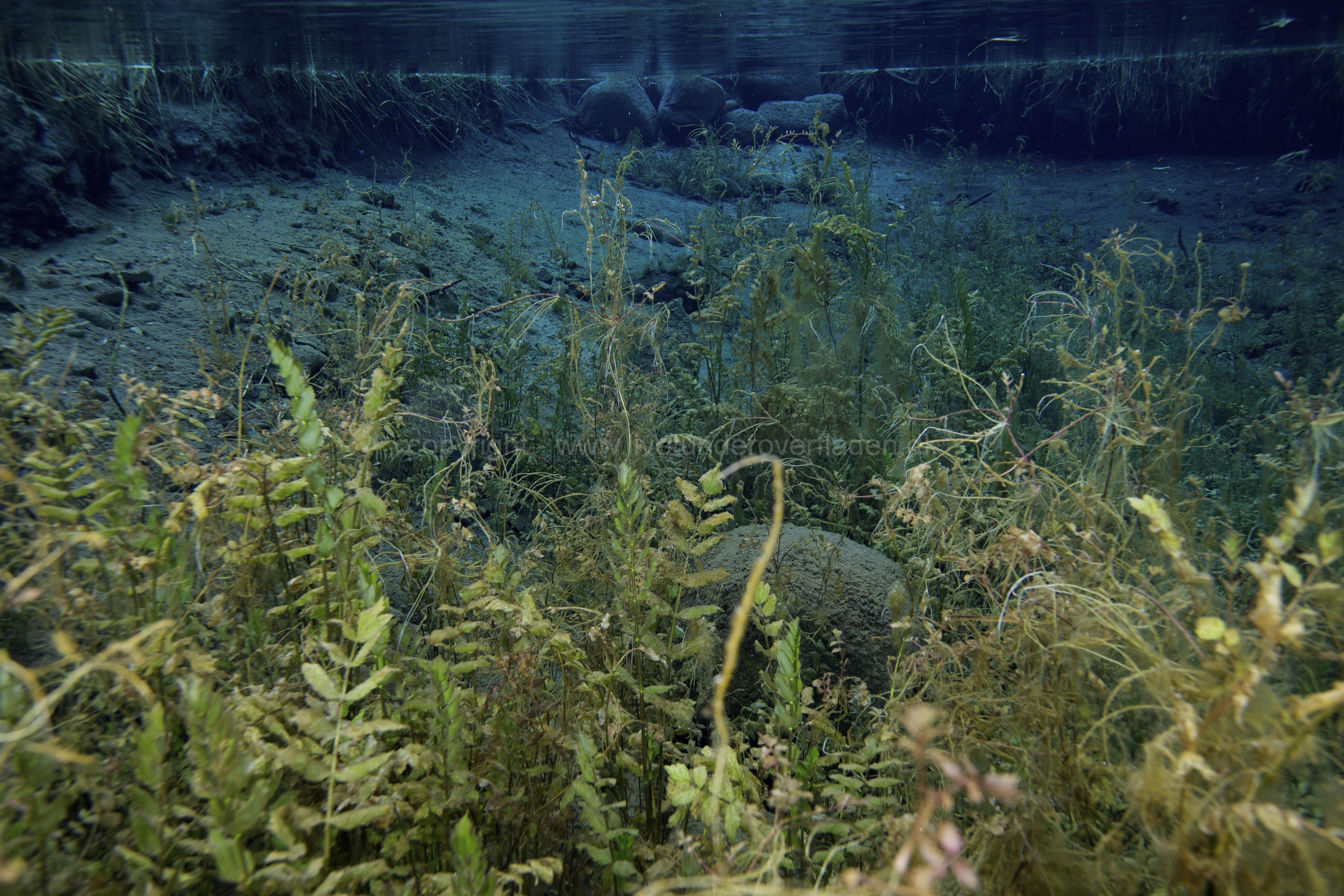 Freshwater habitat_Martin_Kielland 50