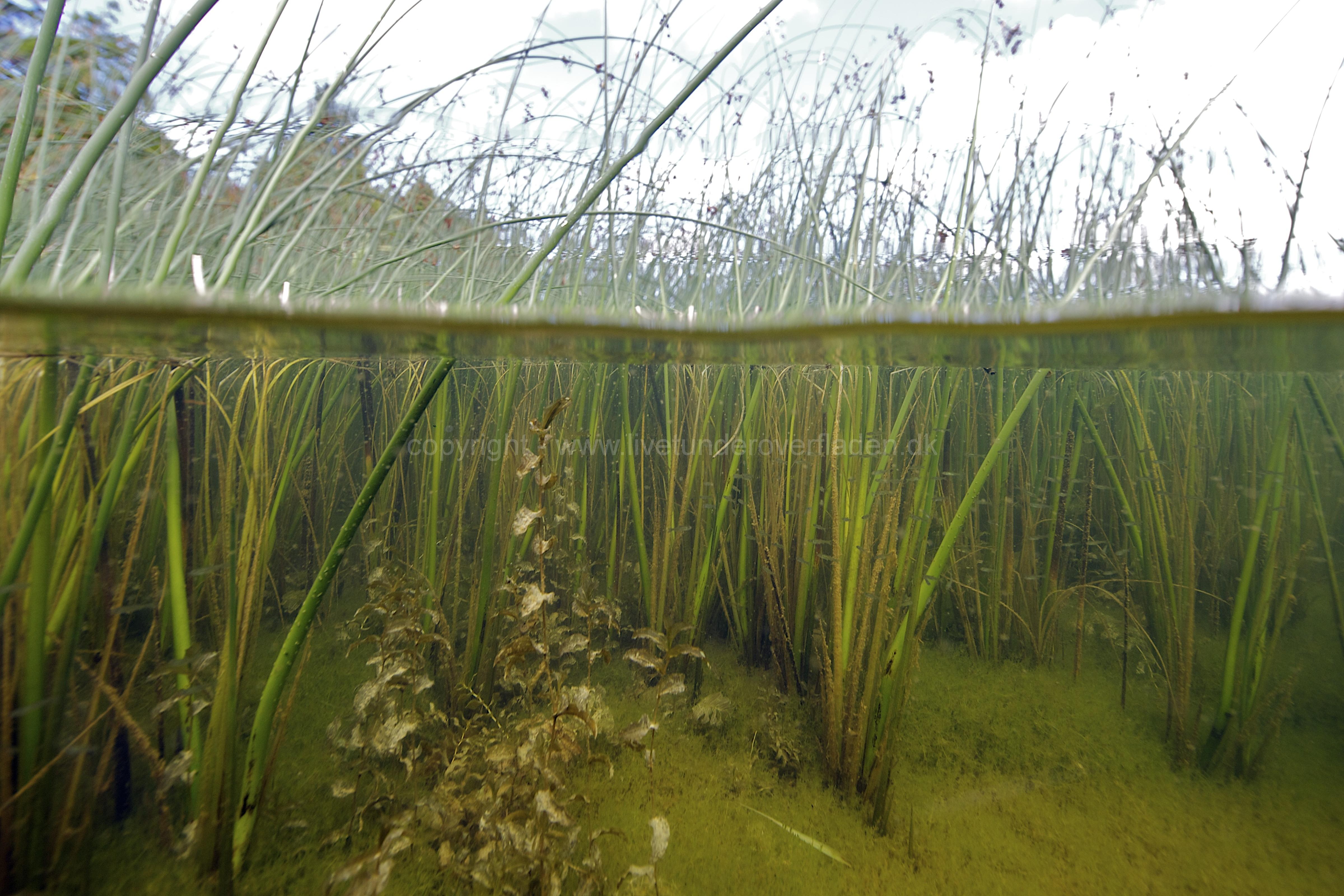 Freshwater habitat_Martin_Kielland 82