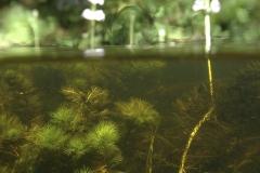 Freshwater habitat_Martin_Kielland 25