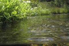 Freshwater habitat_Martin_Kielland 35