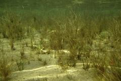 Freshwater habitat_Martin_Kielland 4