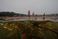 Freshwater habitat_Martin_Kielland 62
