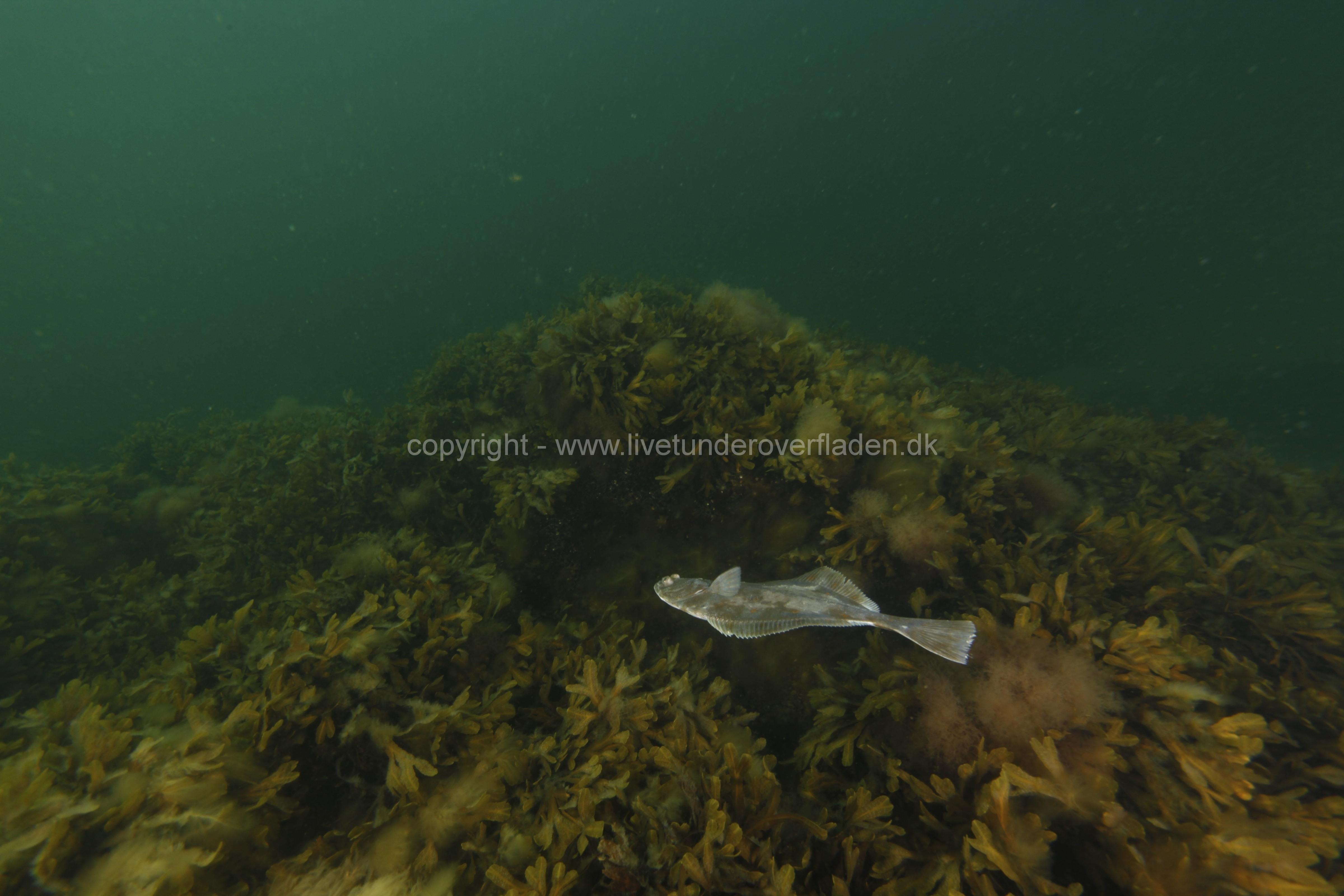 Marine habitat_Martin_Kielland 29