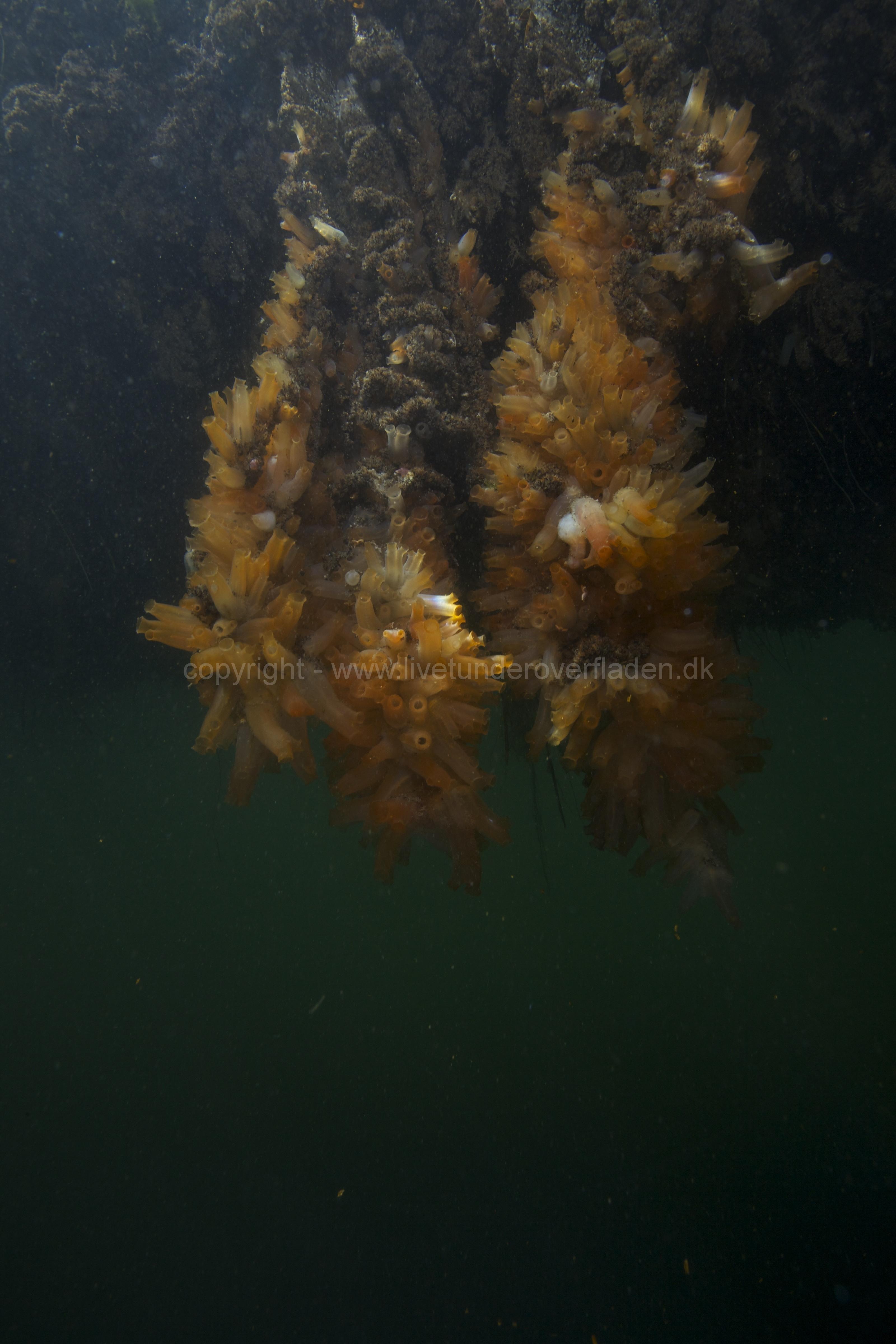 Marine habitat_Martin_Kielland 42
