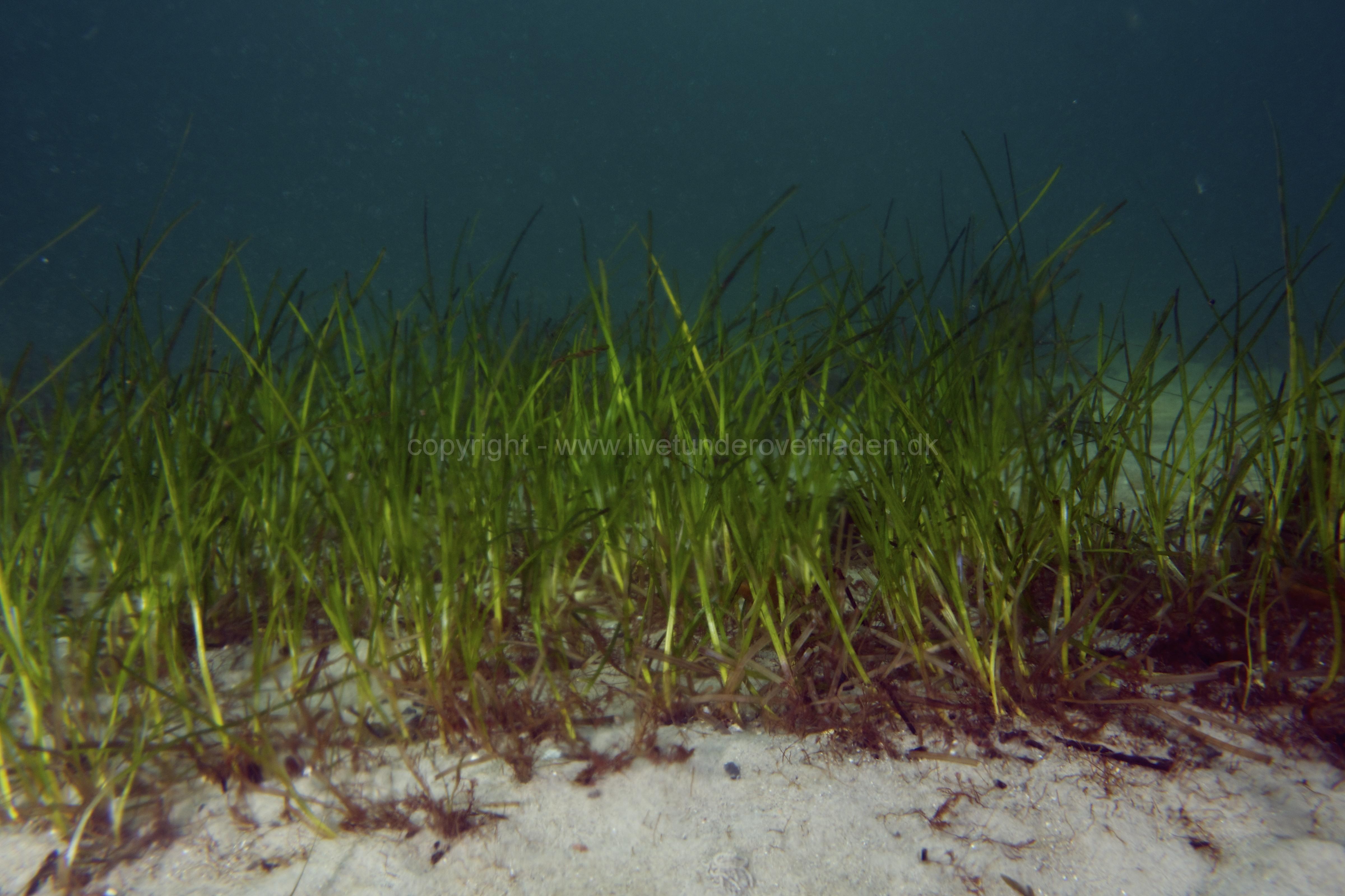 Marine habitat_Martin_Kielland 82