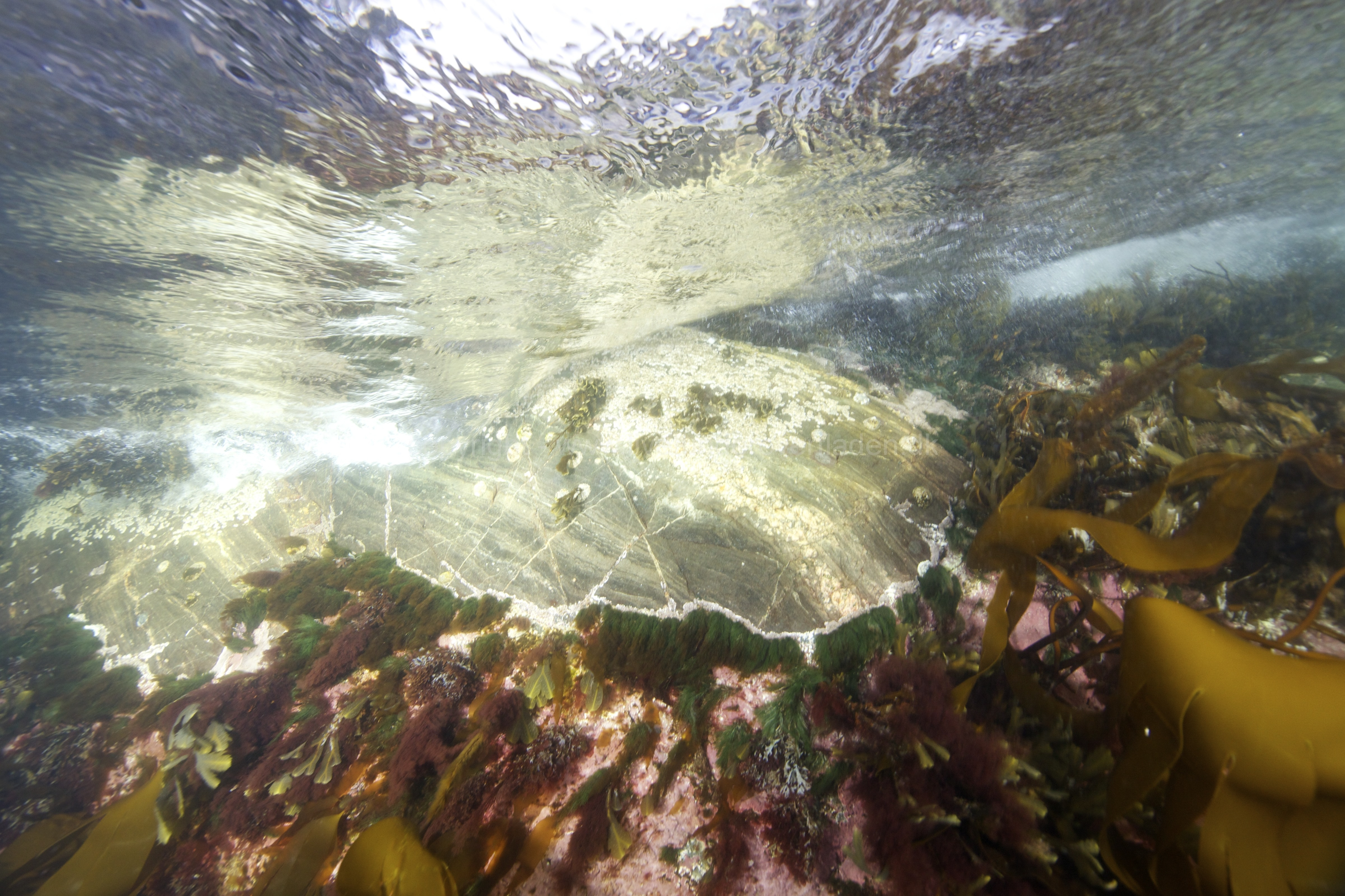 Marine habitat_Martin_Kielland 85