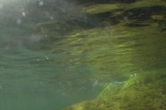 Marine habitat_Martin_Kielland 10
