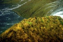 Marine habitat_Martin_Kielland 34