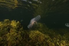 Marine habitat_Martin_Kielland 45