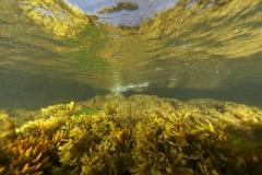 Marine habitat_Martin_Kielland 46