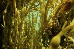 Marine habitat_Martin_Kielland 6