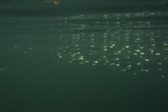 Marine habitat_Martin_Kielland 77