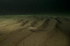 Marine habitat_Martin_Kielland 92