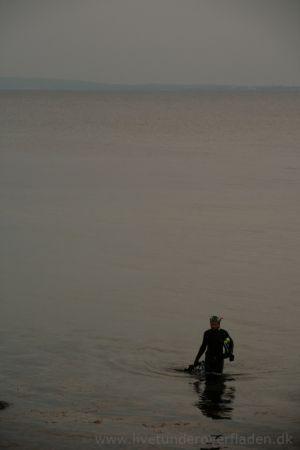 Søvning